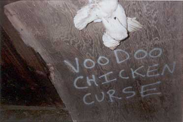 VooDoo Chicken Curse