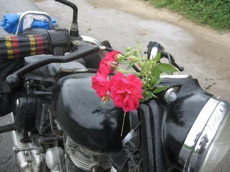 enfield-flowers.JPG